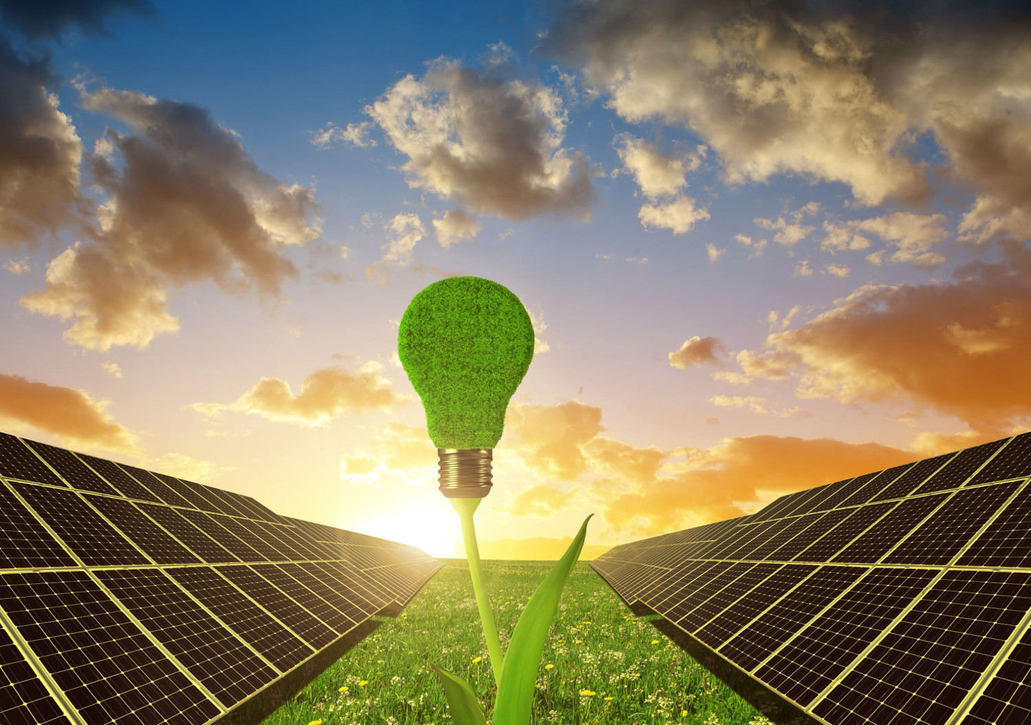 an image of a field of solar panels supplying power to a light bulb via a plant stem